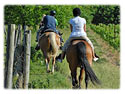 Niagara Riding Stables